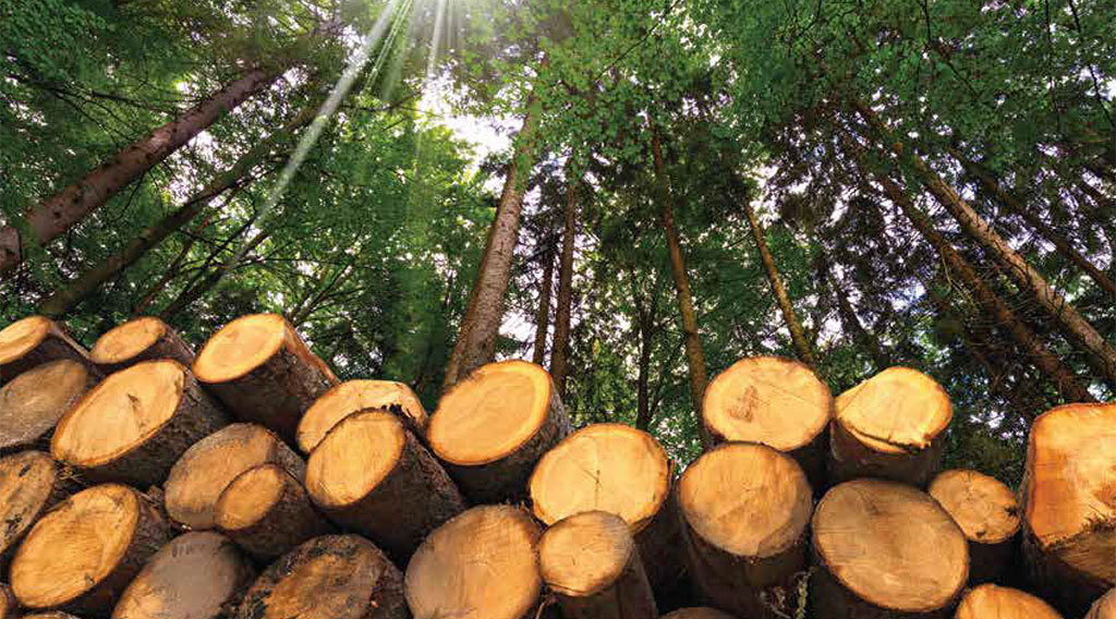 Emerging Market Opportunities for Minnesota's Forest Product Industry